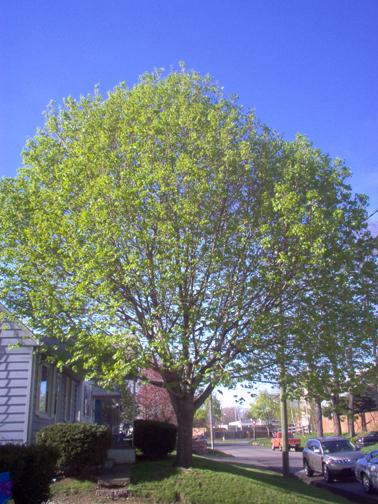 Full_tree