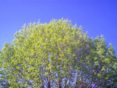May_blue_sky