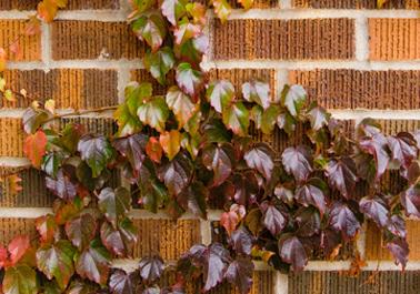 Brick_wall_1